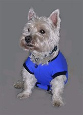 Medical Pet Suit (18)